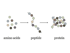 Peptides, growth factors, & stem cells: what they are & how to use them!