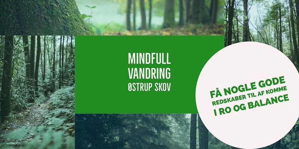 Mindfull vandretur til Østrup Skov