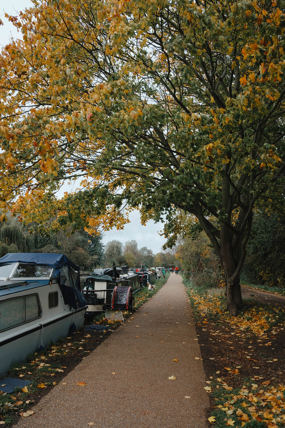 Photograph of the River Lea