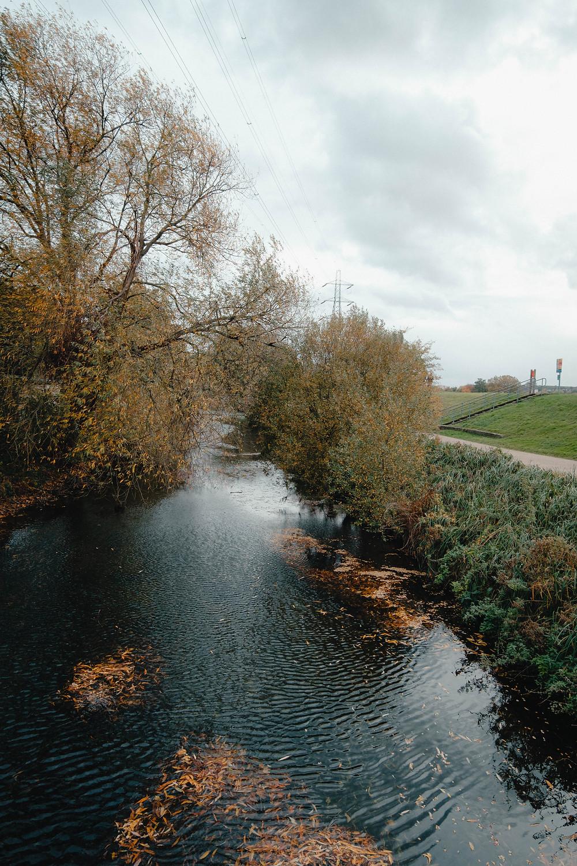 Photograph of Walthamstow Wetlands