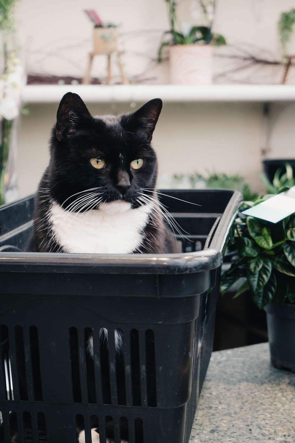 Photograph of a cat at Clifton Nursery