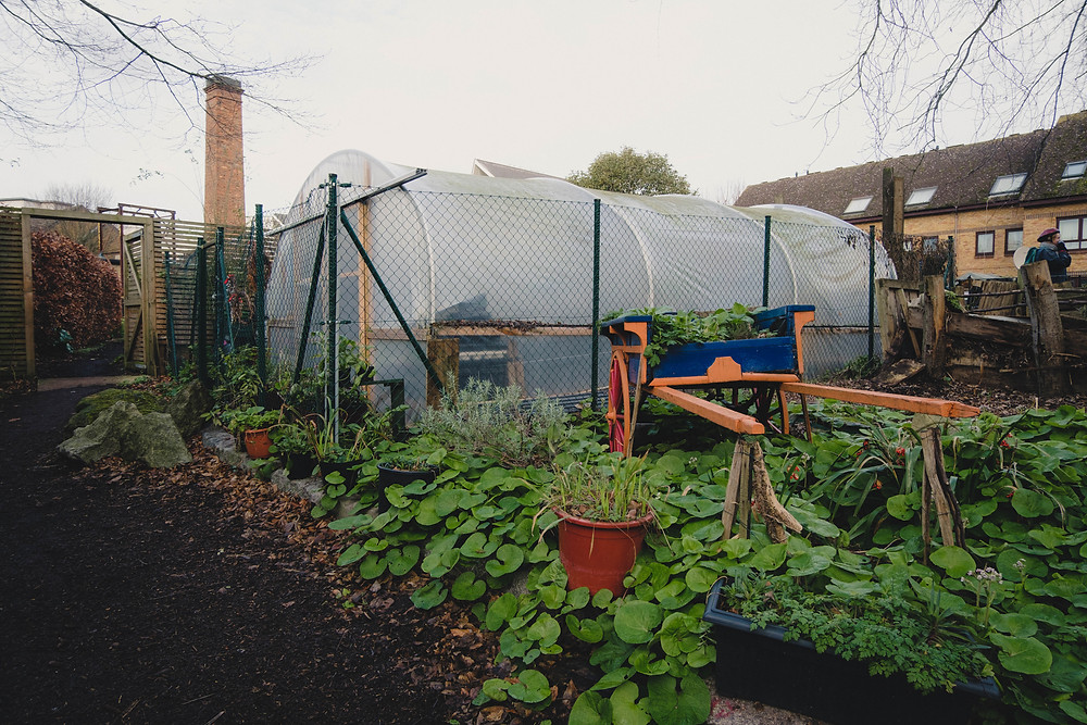 Photograph of the Meanwhile Garden West London