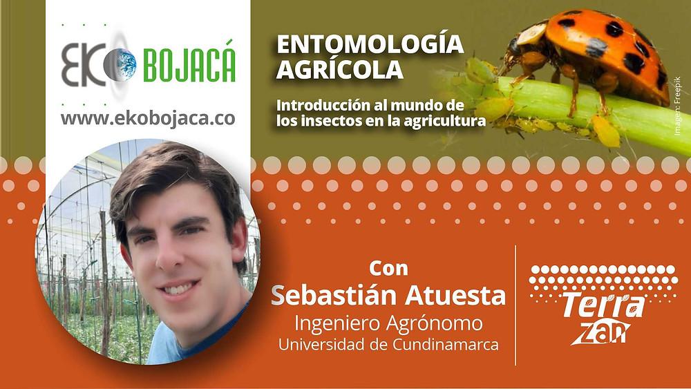 Entomología Agrícola. Capacitaciones de Eko Bojacá
