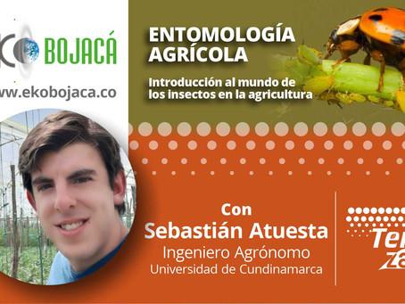 Entomología agrícola en las capacitaciones de Eko Bojacá