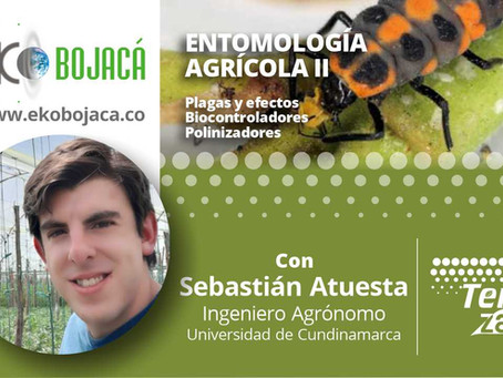 Entomología agrícola II - continuación