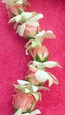 orchid-rosebud lei white and pink.PNG
