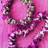 orchid rosebud.JPG
