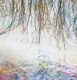 willow reflection