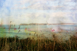 foreground grass