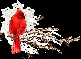 kisspng-allah-oiseaux-2-page-13-5d3ab72e