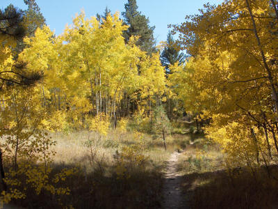 Miller Creek Trail in Fall