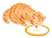 『幸せ猫の長生きBOOK』(宝島社)