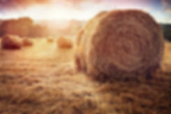 hay-bales-in-golden-field-at-sunset-P7SJ