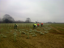 commercial tree and hedge planting
