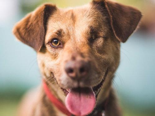 Adopting A Rescue Dog:Mini Book by-Lisa Tenzin-Dolma