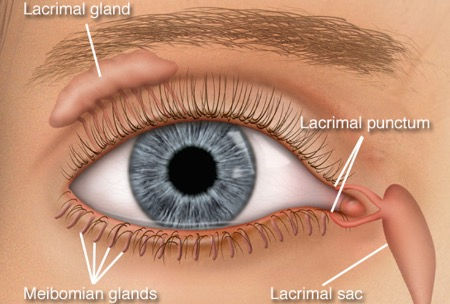 eyelid reconstruction.jpg