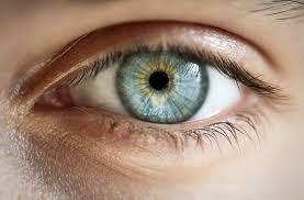 A evolução dos olhos
