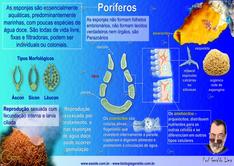 Porifero_1.png