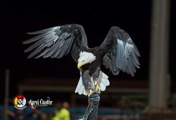 Daryl Custer - Photographer-78