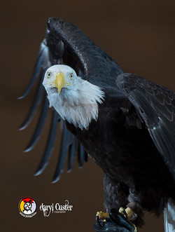 Daryl Custer - Photographer-85