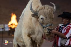Daryl-Custer-2018-1679