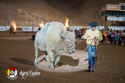 Daryl Custer - Photographer-276
