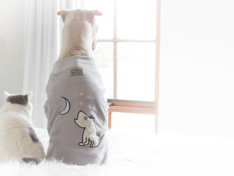 3 Remarkable Lessons People Need to Learn From Pets