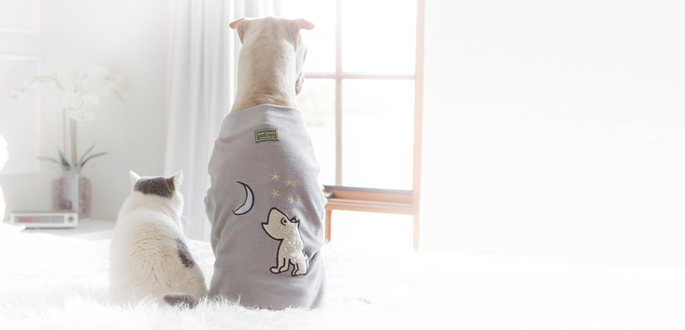 dogs in robes