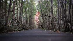 Dans les mangroves
