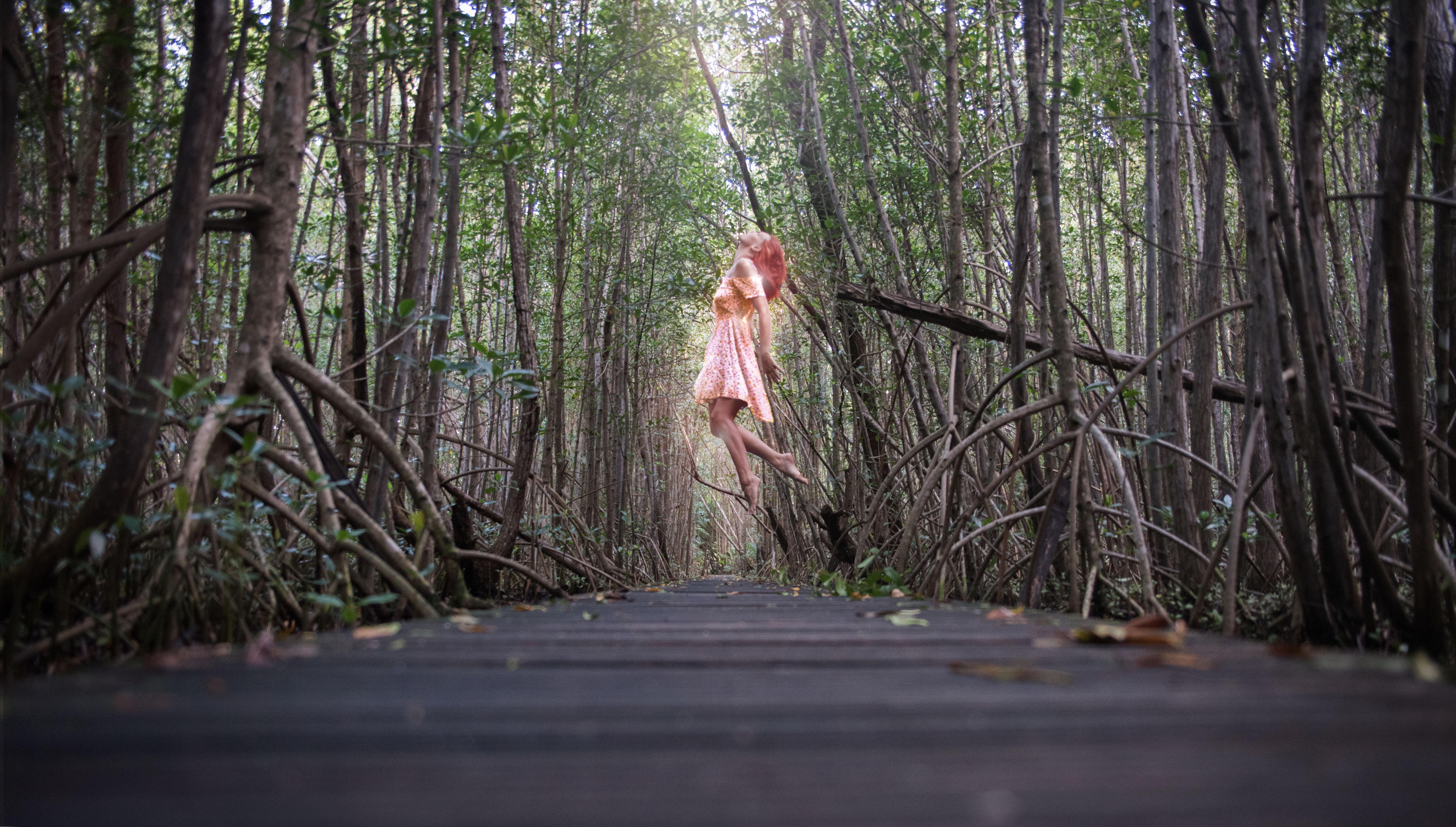 mangrove v2