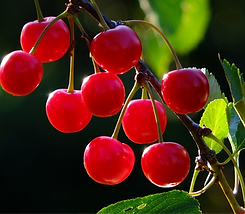 cherries-826113_1920_edited.png