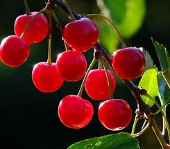 cherries-826113_1920_edited.png