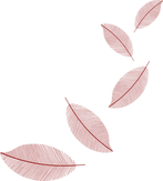leaves-5640107_1280_edited_edited.png