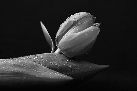 black-1175217_1920.jpg