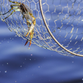 Catching the Crab by Nicole Caracia.jpg