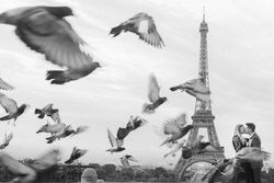 couple kiss with pigeons in paris