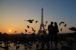 silhouette with pigeons eiffel tower