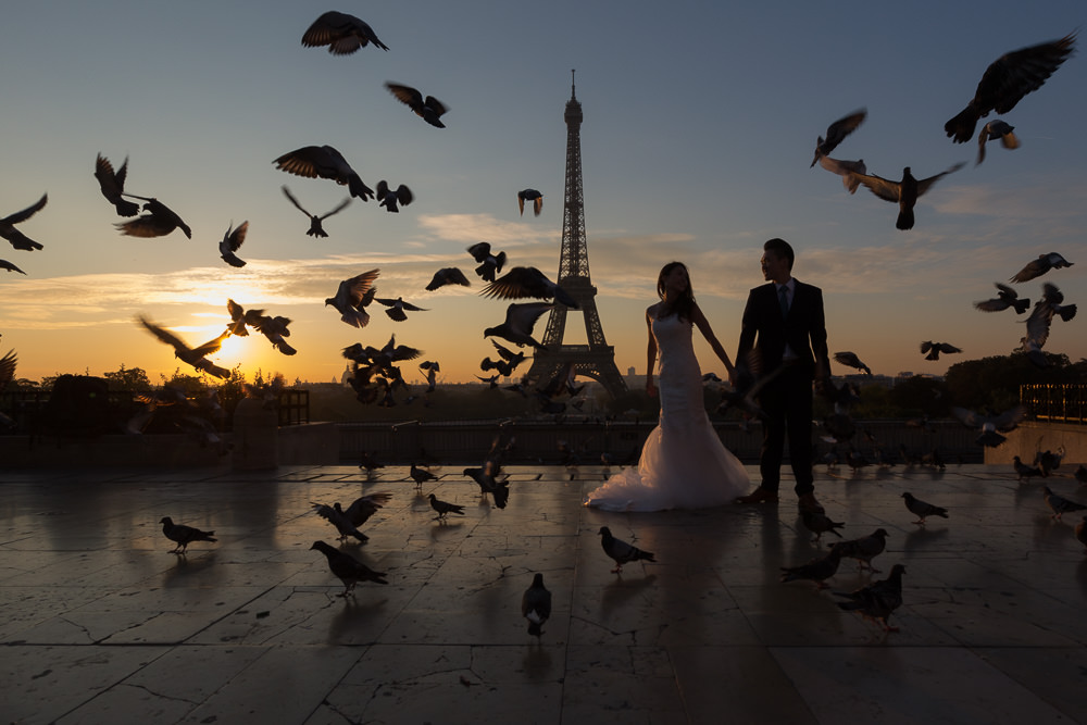 sihouette with pigeons in paris