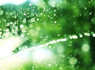 Smart Irrigation Saves Water