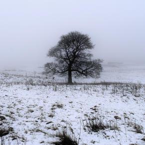 Tree In White