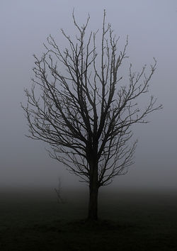 16tree.jpg