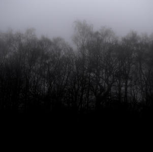 Dark Tree Line
