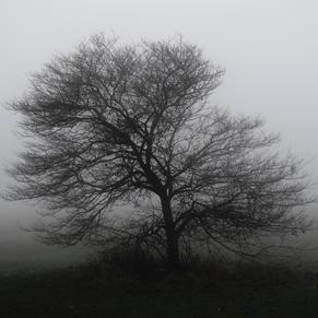 'Morning Tree In Mist'