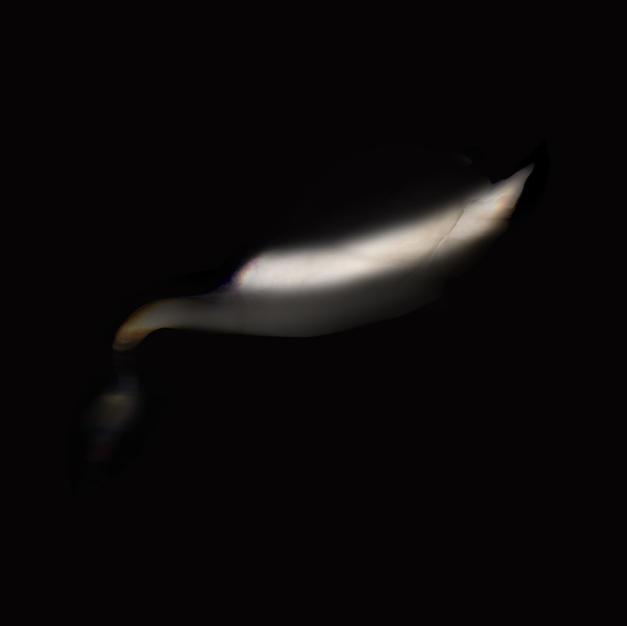 Flash of Swan