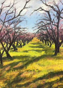 Aging Orchard   16x12""