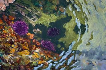 """Sea Urchin Summer 12x18"""""""