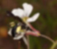 Aagilisima--klein2.jpg