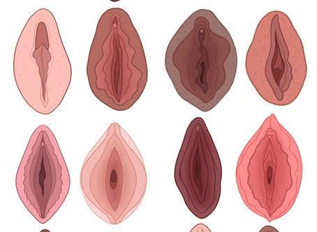 The Art of Vulvas by Charlotte Wilcox