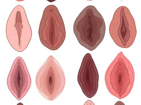 The Art of Vulvas by Charlotte Wilcox