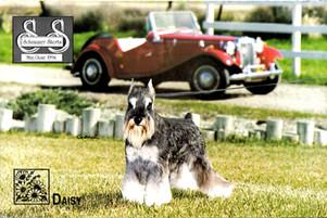 Daisy cover.jpg